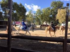 μαθήματα ιππασίας 3.jpg