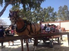 παρτυ με άλογα.jpg